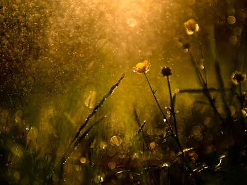 Wildflowers Photograph by Balazs Kovacs, My ShotOn this day there were many rains. After a drencher I went out to the nearby forest in the late afternoon. The light was amazing in the forest.