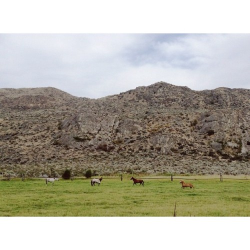 Okanogan horses (Taken with Instagram at Omak, WA)