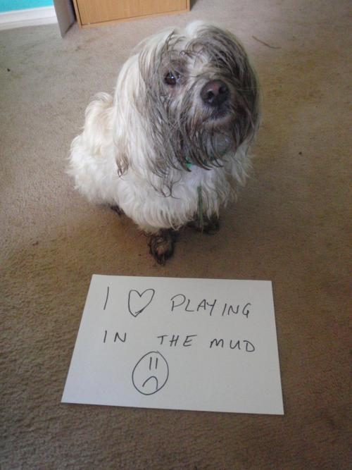 Check out dogshaming, it's pretty great.dogshaming:   I also stole a cherry pie!  dirty shame