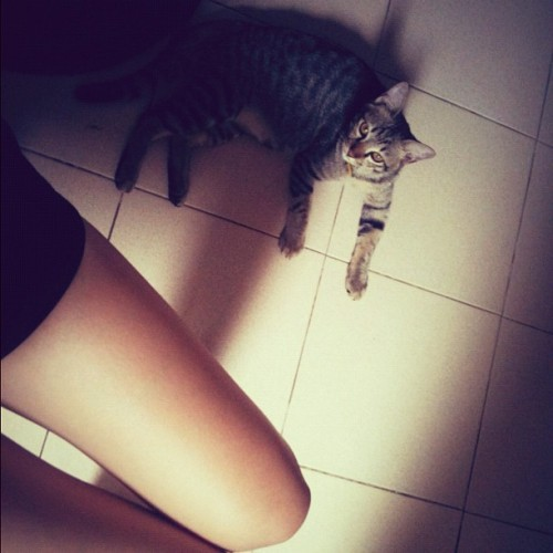 Good Morning!! #phuket #thai #thailand #cat #kitten #girl #lady #women #home #house #animal #leg  (Taken with Instagram at Sinsae Kimsia Saejung (House)@Phuket Villa Downrung)