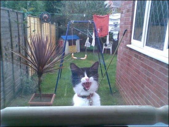 """Open this damn door NOW or suffer the consequences!!"" Photo via Animals That We Love"