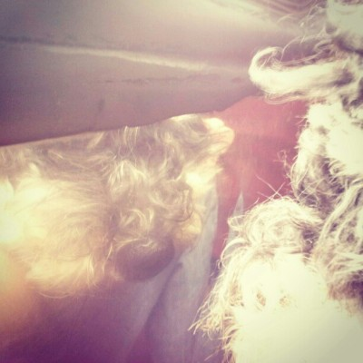 #Reflection #Dog #Pets #Thomas #Night (Tomada con Instagram)