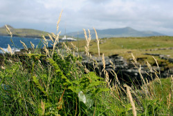 Valentia Island | County Kerry, Ireland (by Saara Eliisa)