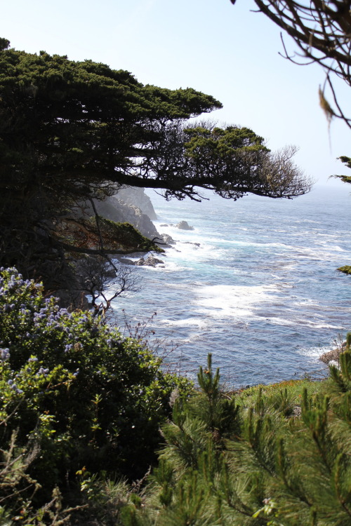 thelittlefrenchbullblog:  Pacific Ocean ~ Central Coast California  {by Lynel Moore}