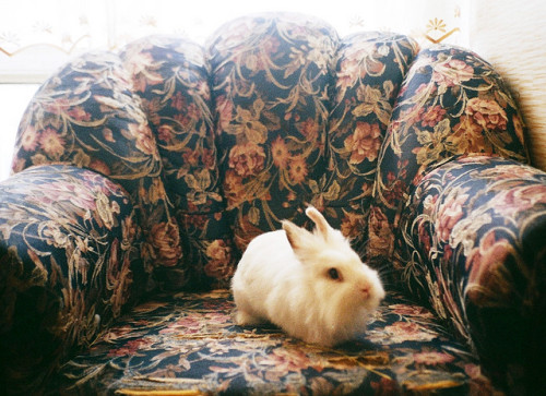 follow the white rabbit by liloolohn on Flickr.