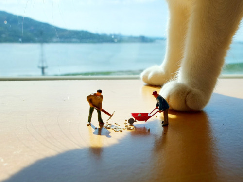 "pedalfar:  500px / Photo ""Miniature cleaning cat litter"" by Emily C"