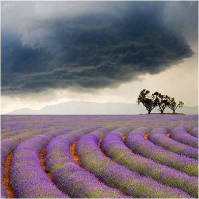 anthropologie:  A storm rolling in over rows of lavender in Provence, France. Via: Universe Explorer