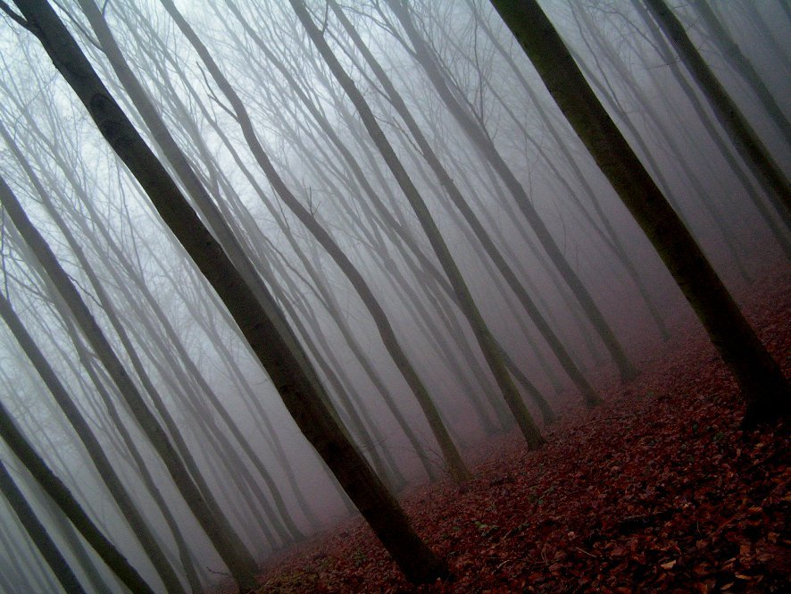 (vía fog in forest by ~EtanOlka on deviantART)