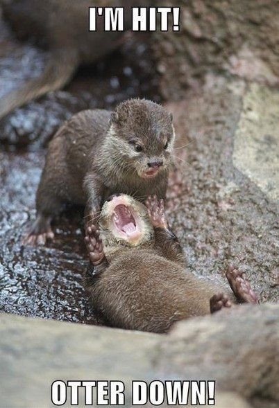 darkcontradiction:  Otter down.