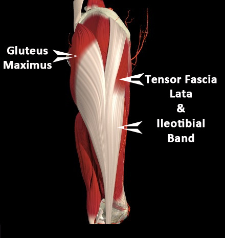 iamyoustudio:  The ITB.  It starts in the pelvis, goes through the glutes, runs along the outside of your leg and attaches at the knee.  Women are more prone to ITB pain in the hip and knee than men, given the shape of the female pelvis.   Pain or no pain, though, yoga crucial to ITB health.    This will also help all you runners if you have knee issues. Another reason we recomend yoga to our clients!