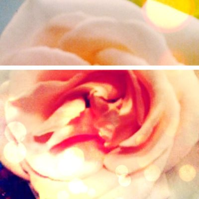 luvlee923's pudding.to Happy luvlee923, #pretty #pink #rose