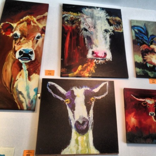 Cows, cows for days http://instagr.am/p/Ojoq4WCwiF/
