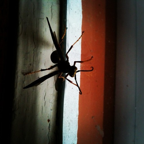 Giant wasp friend is disturbing me while I sleep off sickness. Hang out on the window and not on my face please! (Taken with Instagram at J&B)
