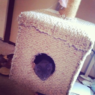 Dad made this little Hide-Away for Lokitty :3 I think She likes it (Taken with Instagram at MsMoonHere)