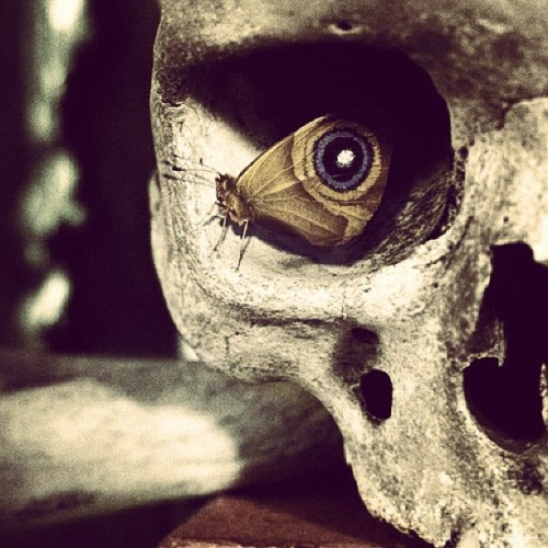 jase79:  #skull #bones #butterfly #eyes #placement #timing #still when you see it. (Taken with Instagram)