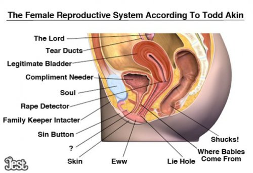 BREAKING: Female Reproductive System reorganization bill was just passed in congress.