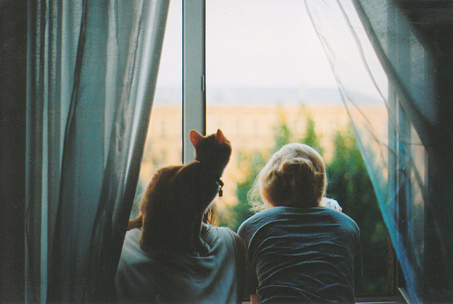 a-whole-lotta-cats:   L O V E by Nastya Jour on Flickr.
