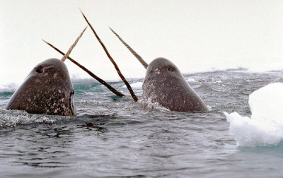 I love sea unicorns/narwhals.