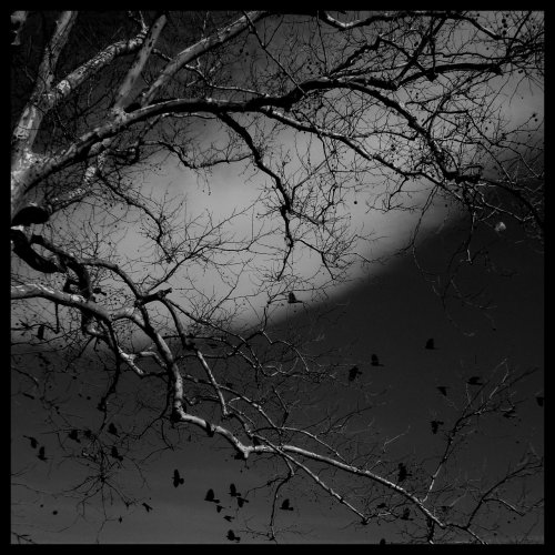 darkface:  Black Birds. by =NerminKrupic