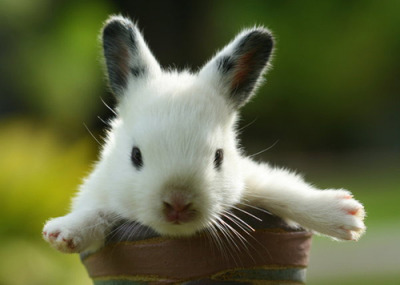 Bunny! (via fanpop)