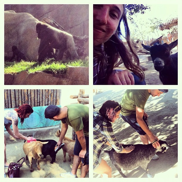 #sandiego #sandiegowildanimalpark #safari #pettingzoo #goats  (Taken with Instagram)