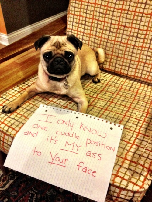 dogshaming:  beatrice is the worst kind of cuddler