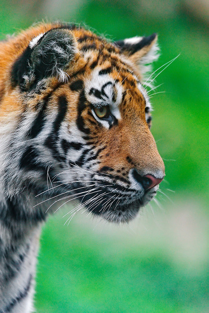 Profile portrait of Liska by Tambako the Jaguar on Flickr.