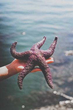 man-and-camera:  Starfish
