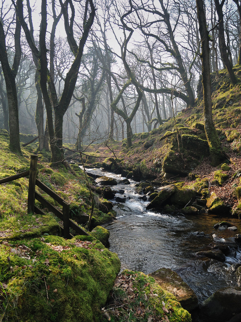fuckyeahphotography:  Smoky Day on Moor Brook, Dartmoor (by @MWolstenholme)