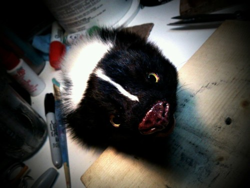 Skunk taxidermy in progress…..