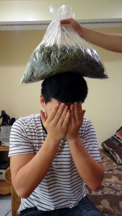 squishysushee:  3/4 pound of weed on my friend's head Taken by squishysushee