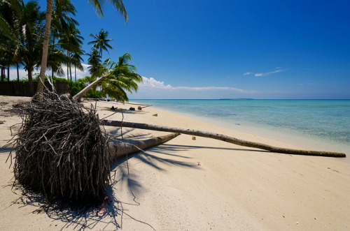 Beach at Derawan Islands, Berau, East Kalimantan, Indonesia. (by pitgreenwood)