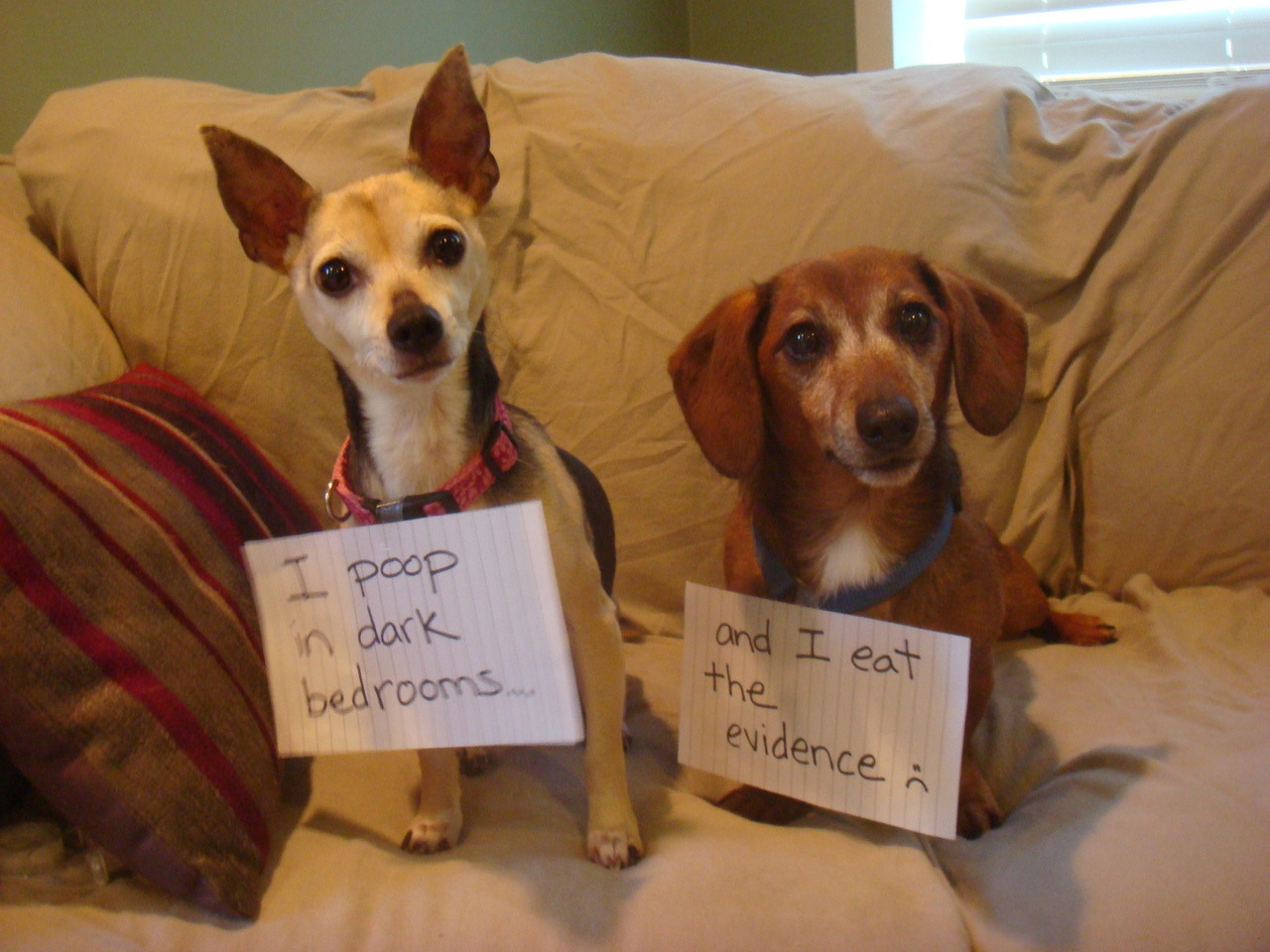 dogshaming:  Sneak and accomplice