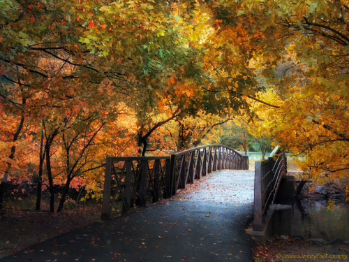 Autumn Overpass by Jessica Jenney