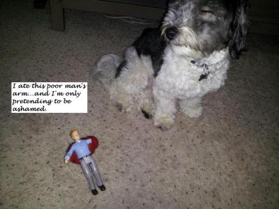 dogshaming:  What he doesn't know is I ate his wife's leg, too…but no one will ever find her…