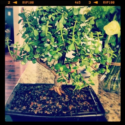 Bonsai from my awesome AZ friends (Taken with Instagram)