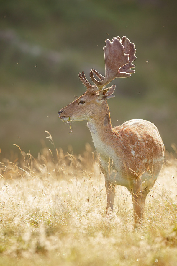 "magicalnaturetour:   Photo ""pretty boy"" by Mark Bridger:)"