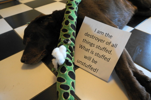 dogshaming:  If it has a head I will rip that off as well, free of charge