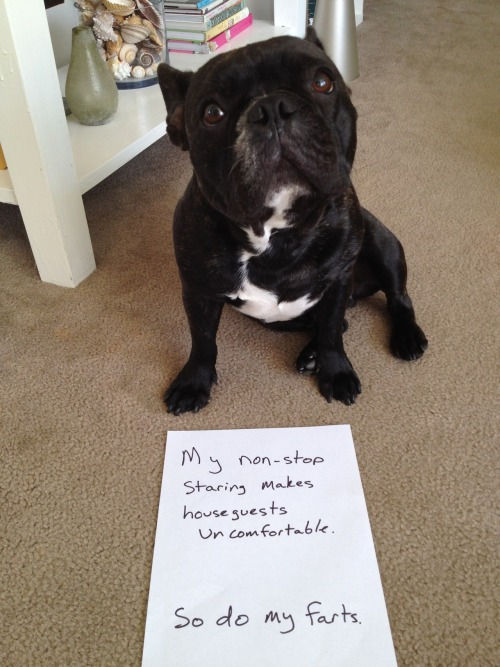 dogshaming:  Seriously.   Ha.
