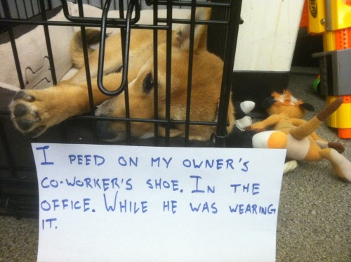 dogshaming:  I peed on my owner's co-worker's shoe. In the office. While he was wearing it.  Depending on the coworker, this seems like it could be an act of valor.