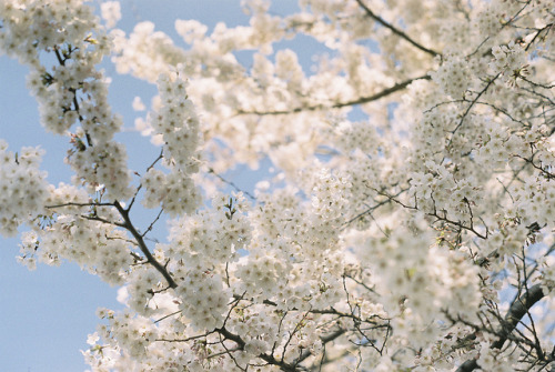 spring #4 by Benjyamin on Flickr.