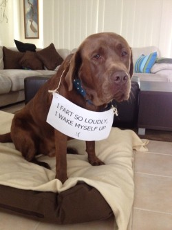 dogshaming:  Benny even surprises himself, sometimes.