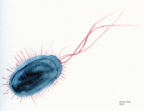 fieldnotesbiologyculture:  watercolor of Escherichia coli bacterium