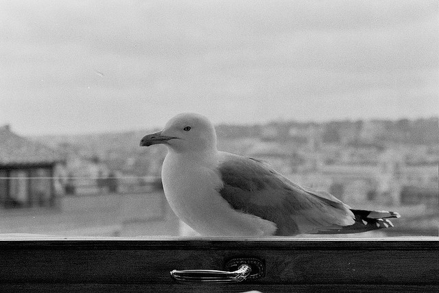 seagull at the hassler hotel rooftop restaurant with the city behind it, black and white film, 2008.