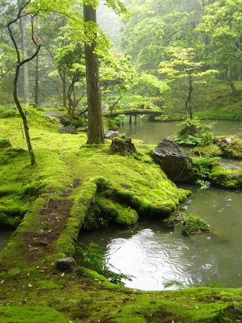 jumpingjacktrash:  can this be my back yard please