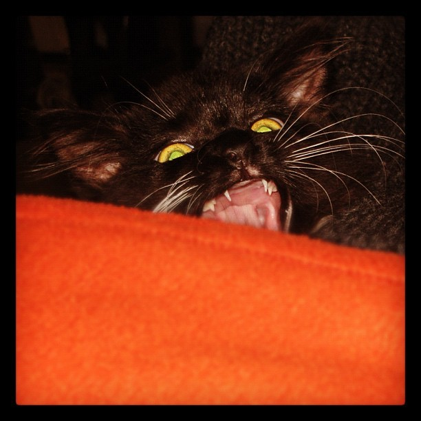 #monster #cat #fear #horror #pet #petstagram #animalsofinstagram #animals #charlie #gatto  (Scattata con Instagram)