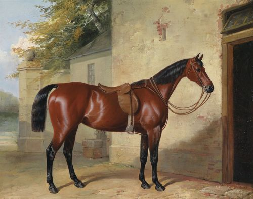 "Gesattelter Brauner [""Saddled Bay Horse""] In the 1840s, horse racing was by far the most popular spectator sport both in the United States and Europe, with major races attracting in excess of 60,000 spectators. This 1848 painting by William Barrand is of an unknown horse, but is representative of the typical build of a thoroughbred of the day. Their lean build was not yet as greyhound-esque as today's racehorses, but was still muscular, impressive, and built for speed. The Barb and Arabian influence in the breed are both clearly evident in this beautiful painting of a horse whose name has been lost to time."