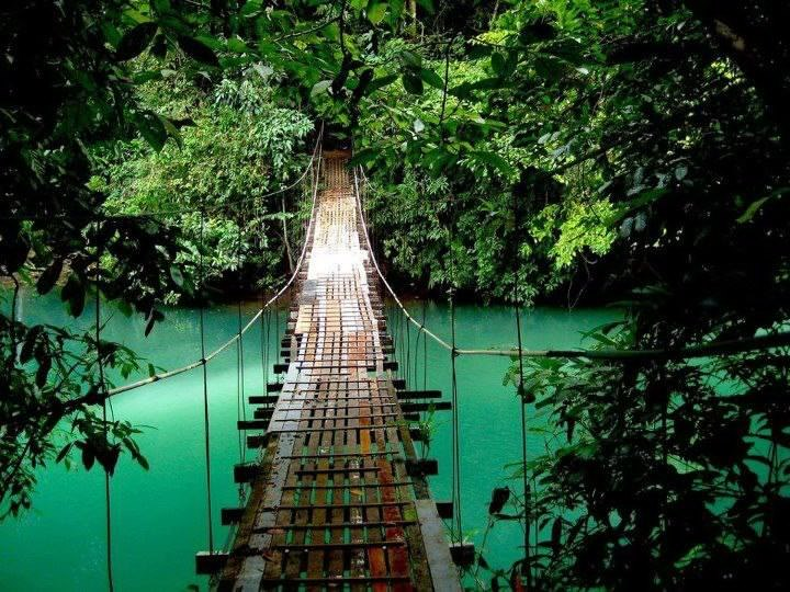 Suspended bridge in the jungle.