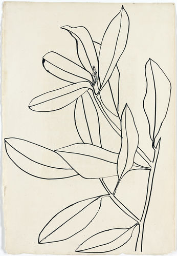 "sympathyfortheartgallery:  ""Leaves, Ile St. Louis"" (1950) by Ellsworth Kelly. The artist collects drawings by greats such as Matisse and Picasso. (via Ellsworth Kelly Casts His Cold Eye on Art Market, Peers - Bloomberg)"