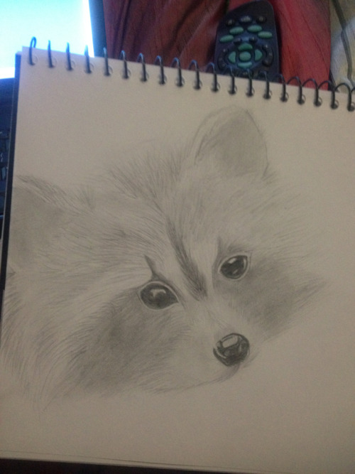 Raccoon drawing, unfinished. But too lazy to finish it at the moment :)
